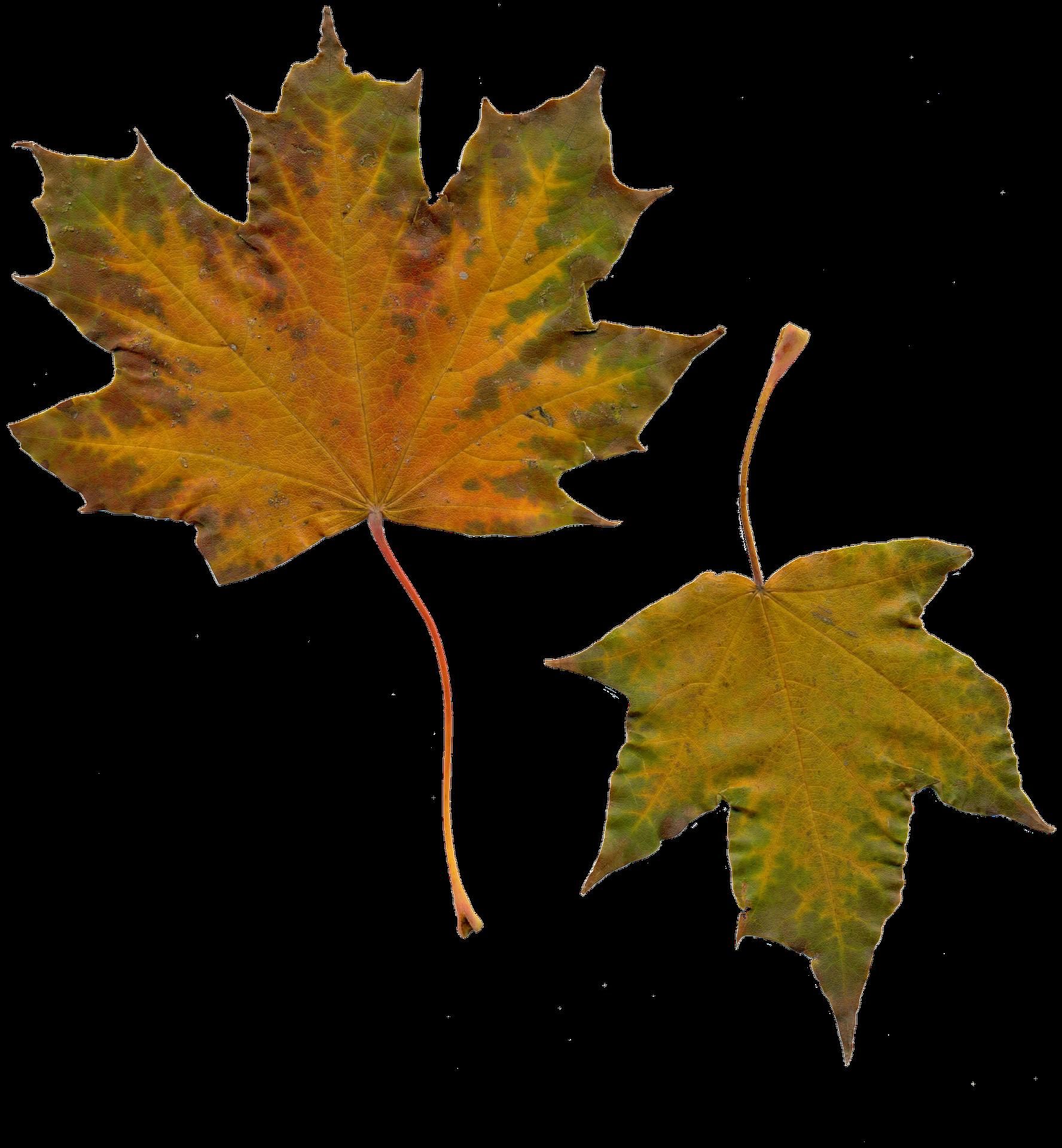 leaves-1029126_1920